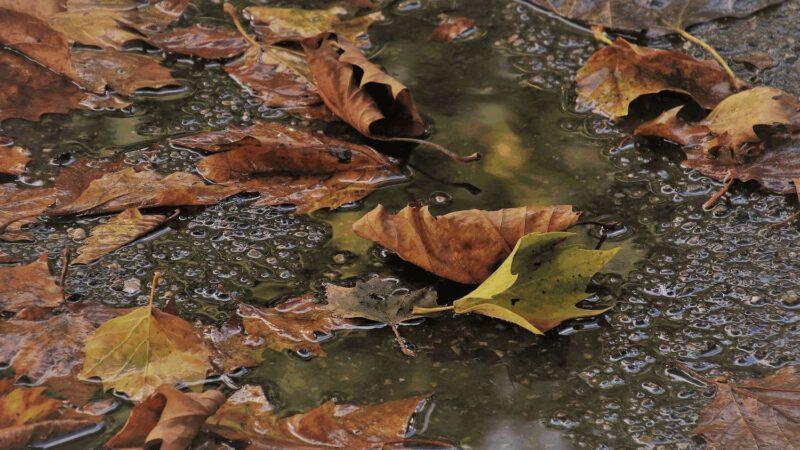 Herbstzeit – Erkältungszeit,  nicht zwangsläufig!