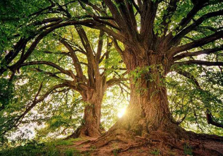 Wald – energiespendender Lebensraum