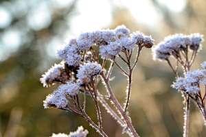 Blumen im Winter