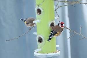 Futterkasten für Vögel im Winter