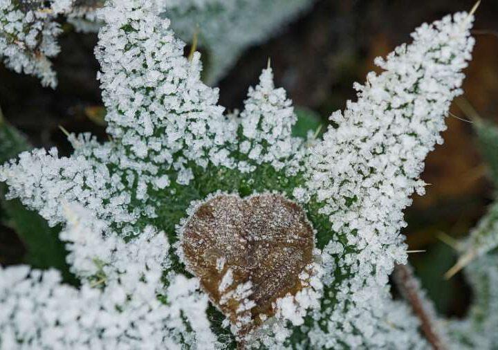 Garten in der Winterzeit