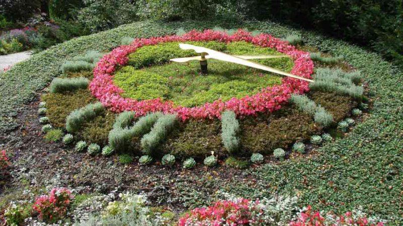 Blumen und ihre innere Uhr