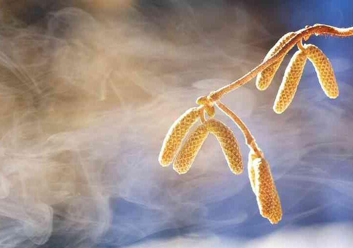 Heuschnupfen oder Pollenallergie